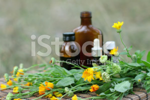 stock-photo-10847764-medical-calendula